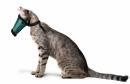 Kaganiec dla kota r.2(M)