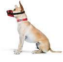Kaganiec dla psa regulowany r.6(XXL)(33-36cm)