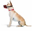Kaganiec dla psa regulowany r.4(L)(22-30cm)