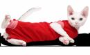Koszulka pooperacyjna r.4(L)(czerwona)/44cm